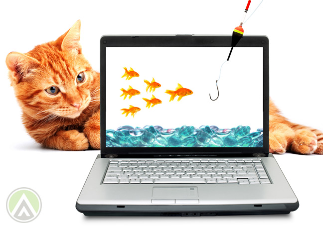 oreange-cat-staring-into-laptop-with-goldfish-and-hook